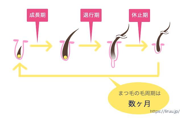 まつげの毛周期・美容液の働き